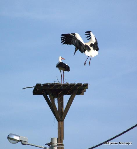 nesting platform by skylight11
