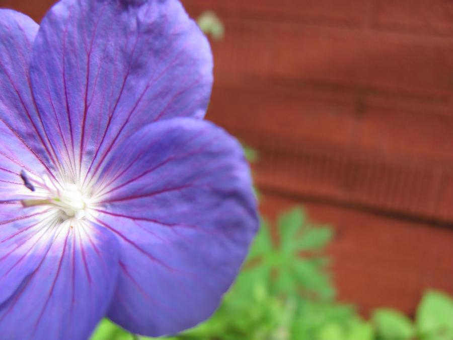 Blue Flower by charliemaedel