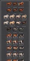 Holsteiner horse coat declination