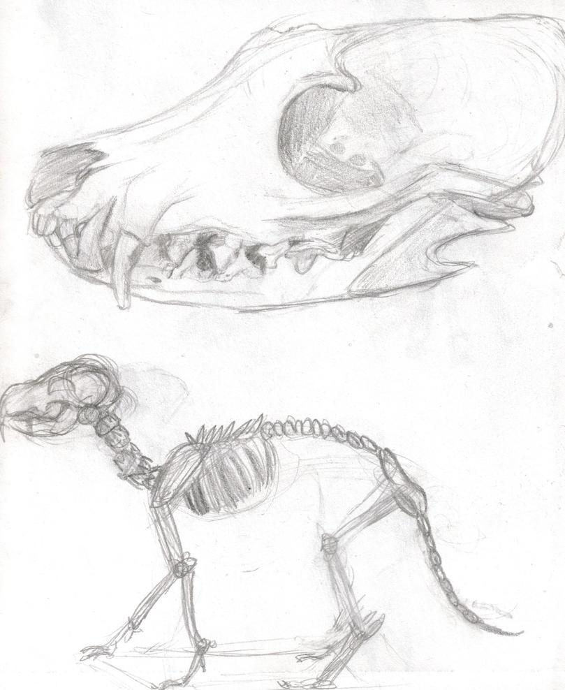 Animal Anatomy Red Fox Study By Hieirocks16 On Deviantart