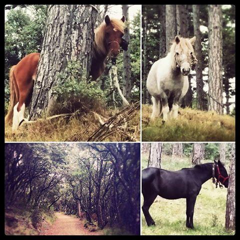 Horses on Mabon by neerai