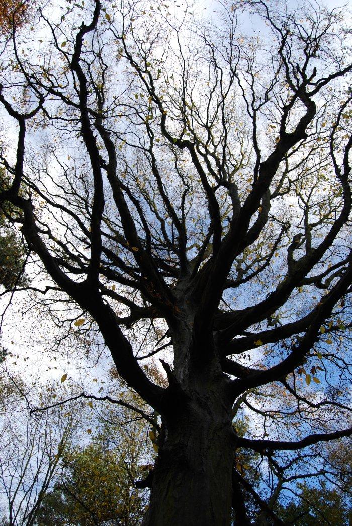 woodland veins by Puckmonkey