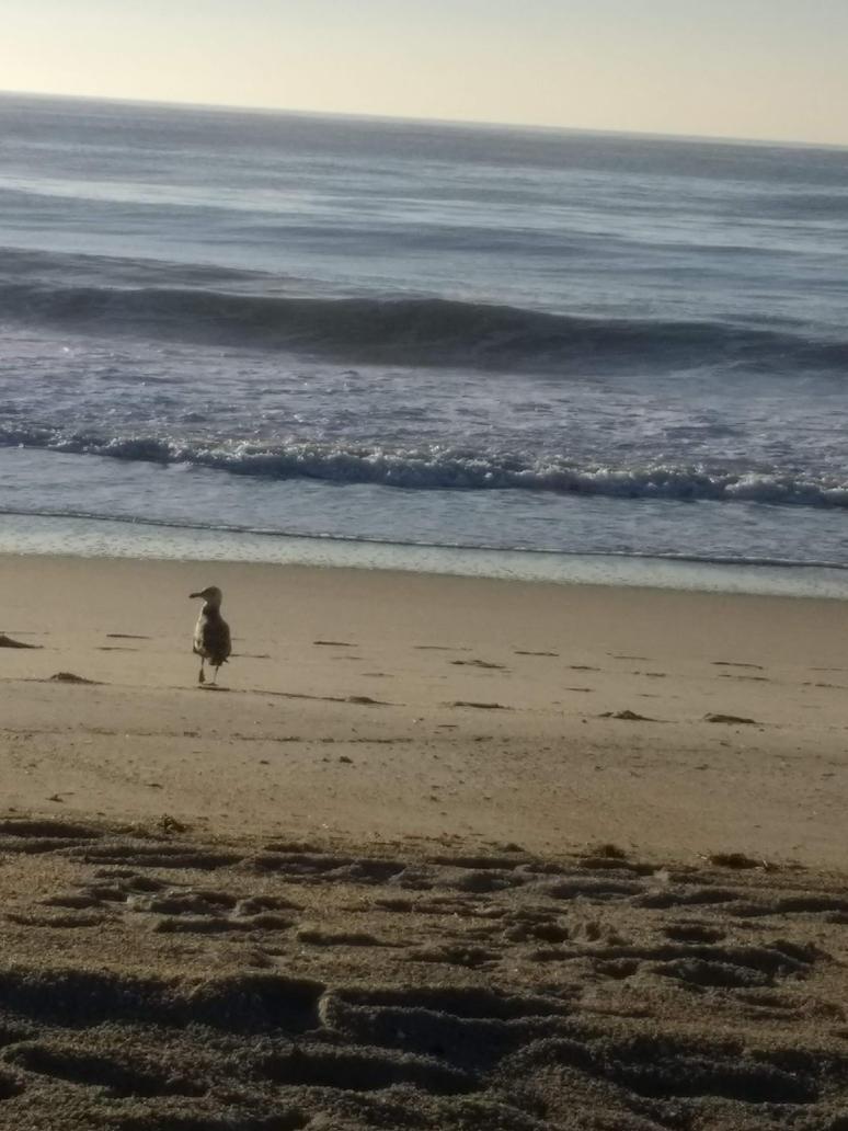 Beachy by marihikari