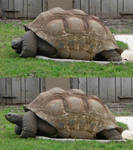 Tortoise stock by PirateLotus-Stock