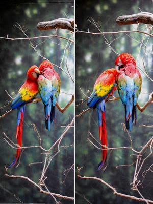 Zoo 5 Macaws by PirateLotus-Stock