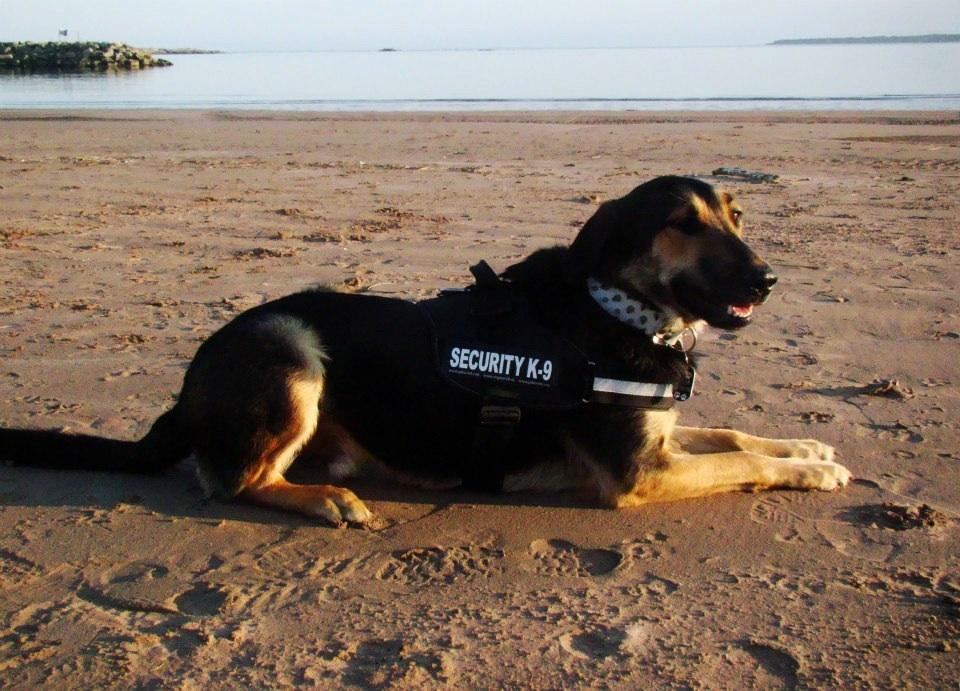 Photo de vos chiens à la plage! ___police_dog____by_skaella-d64opwv
