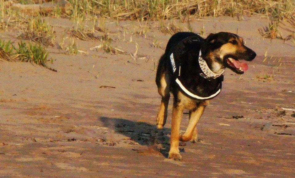 Photo de vos chiens à la plage! ___runnin_____by_skaella-d64oq76