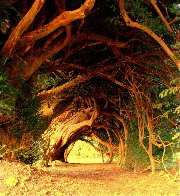 Beautiful-tunnel-of-trees-8 by Cocoismynumber1food