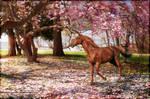 Under the cherry tree~