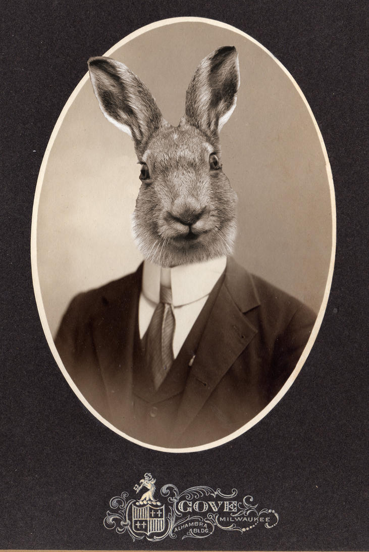 The Handsome Hare by night-is-my-day
