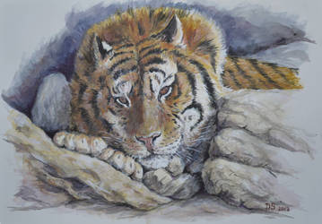 tiger at rest by acrylicwildlife