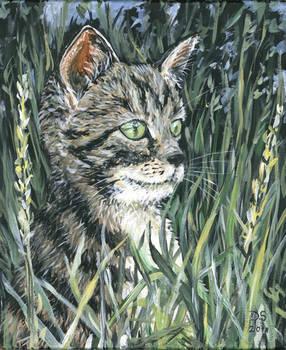 garden kitten