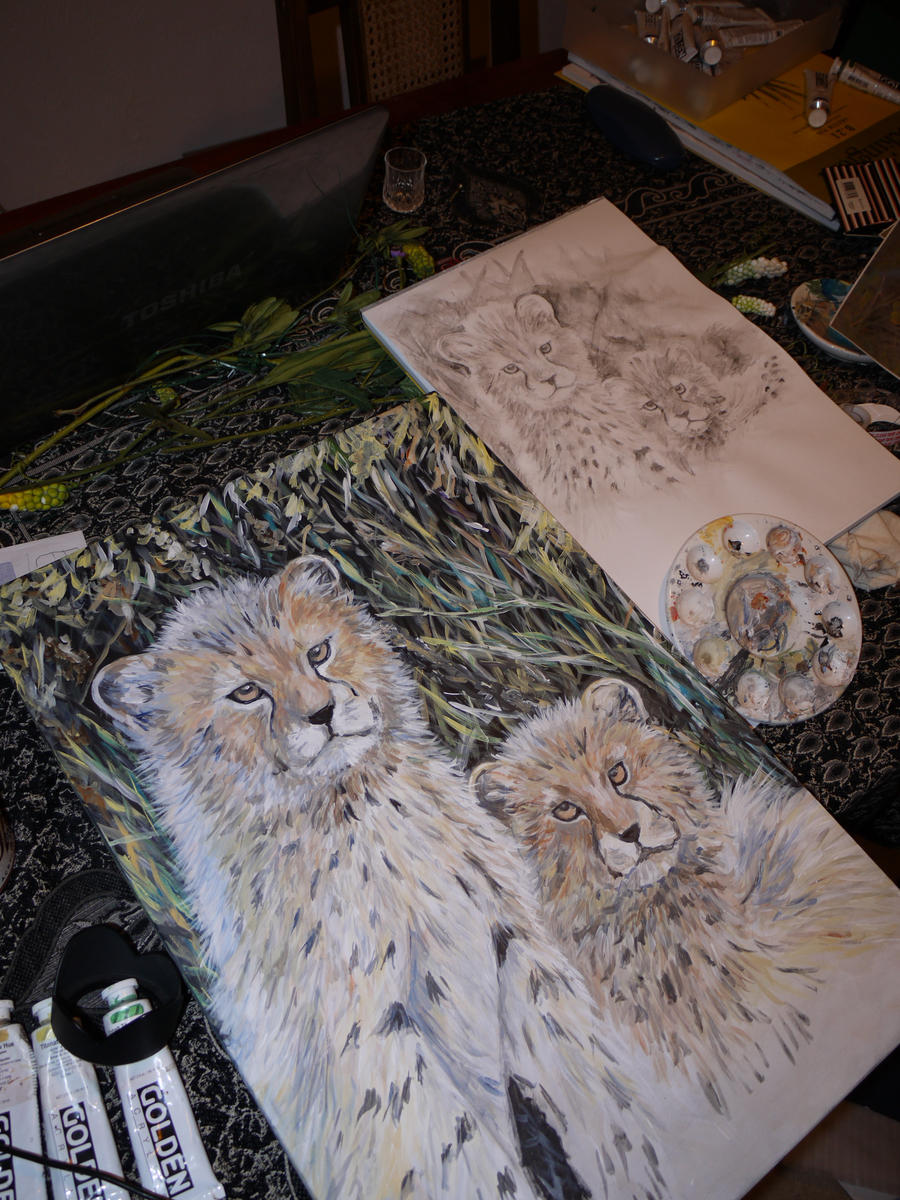 a study on the cheetah Although cheetah focussed the book provides information relevant to the study of  broader topics such as wildlife conservation, captive breeding.