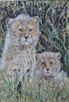 cheetahy cubs on watch