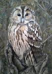 Miki's Owl