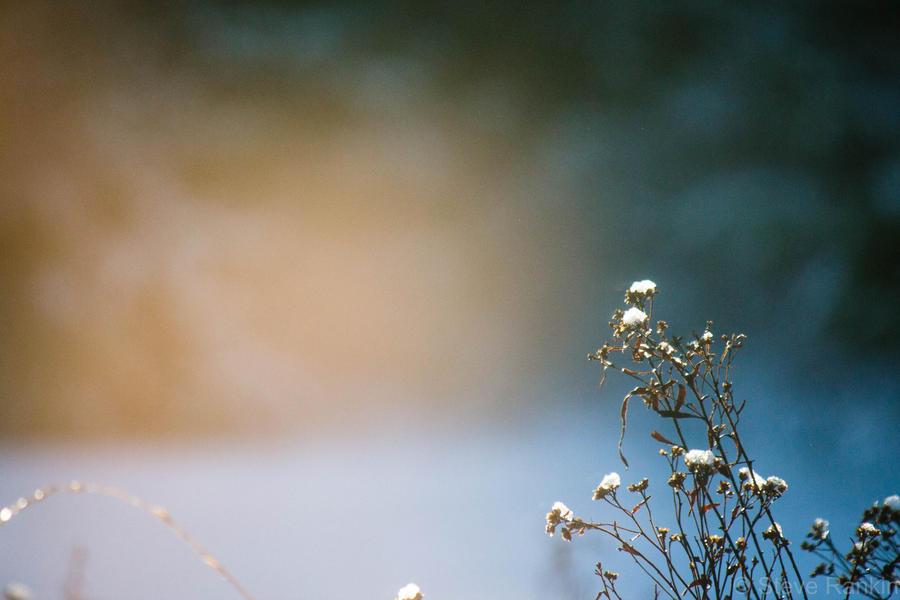 First Light by steverankin
