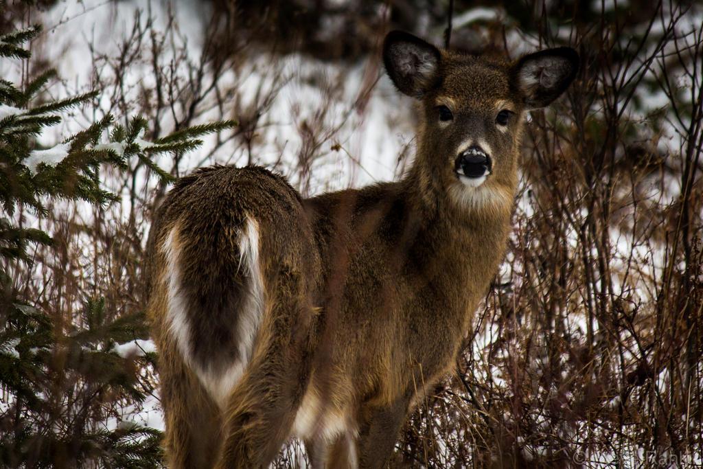 Yarmouth Wildlife by steverankin