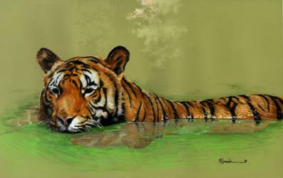 Tiger in jungle by marcgosselin