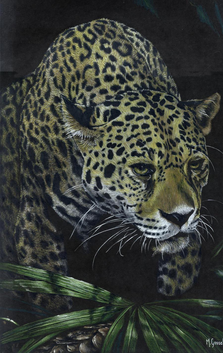 Jaguar by marcgosselin