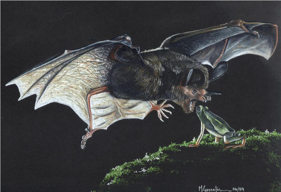 Bat by marcgosselin