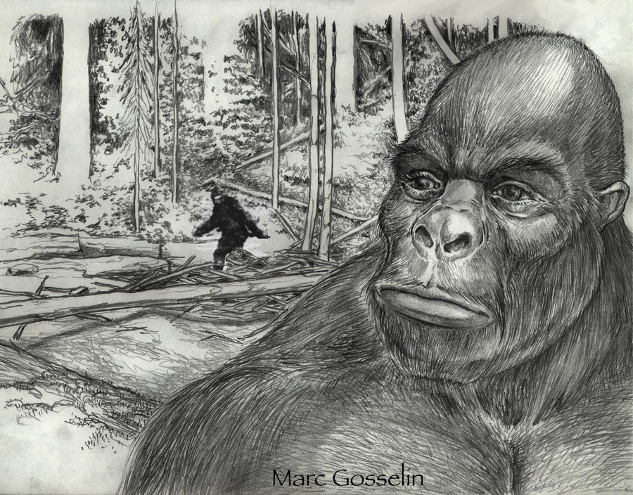 Sasquatch by marcgosselin