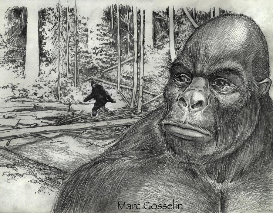 Sasquatch by marcgosselin