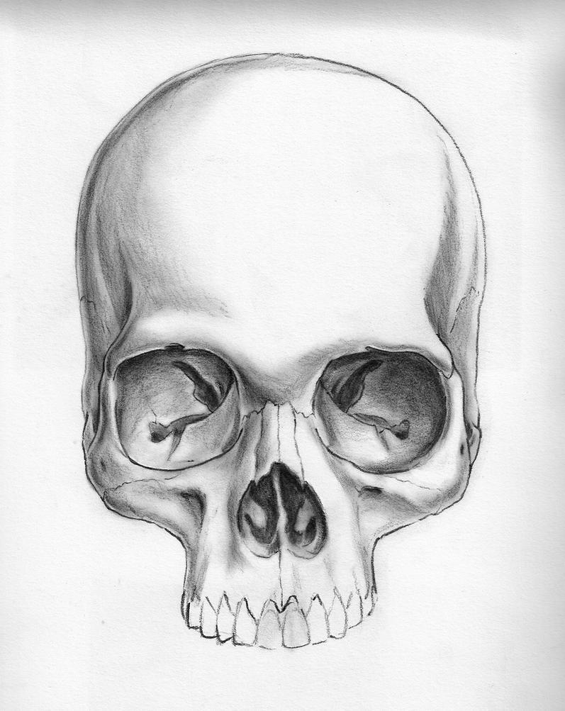 Skull Jaw Tattoo: Skull Without Mandible By Marcgosselin On DeviantArt