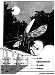Firefly power has dazzling potential by marcgosselin