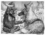 'ICU', 'Curious Wisdom' by marcgosselin