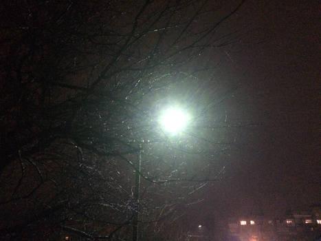 Light and Wet Tree