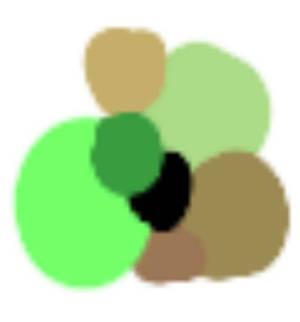 rando colour palette