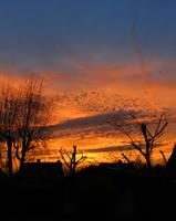 Sunset at springtime