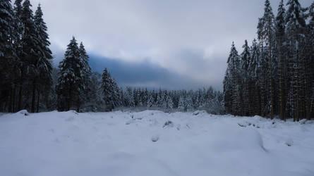 Winter in the Belgian Ardennes 2