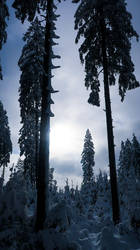 Winter forrest with frozen figures