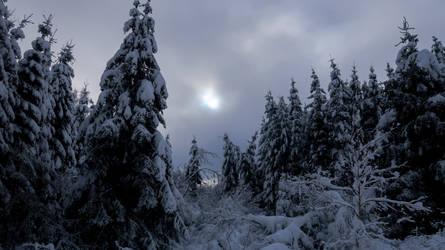 Winter in the Belgian Ardennes 4