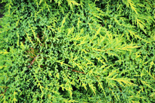 Green Tree Texture