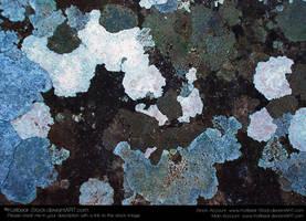 Texture 057 by Katibear-Stock