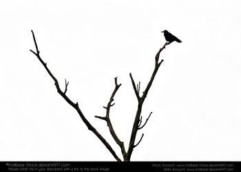 Animals 032 - Bird Silouette