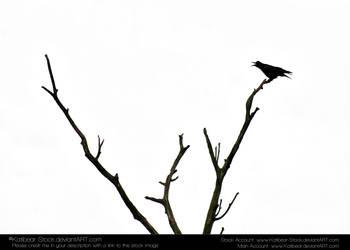 Animals 033 - Bird Silhouette