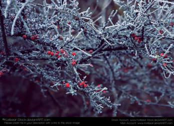 Nature 036
