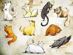 Many Cats Many Cats Many Cats