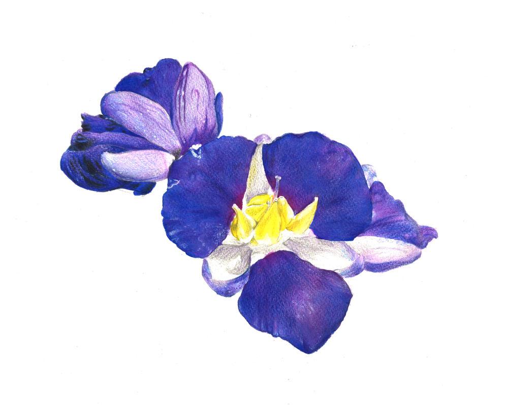 Flower2 by FreeSpiritArtSoul