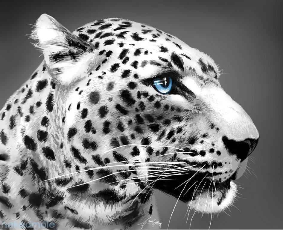 snow leopard wallpaper hd free download