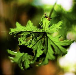 Leafy Greens by vetal-vetal