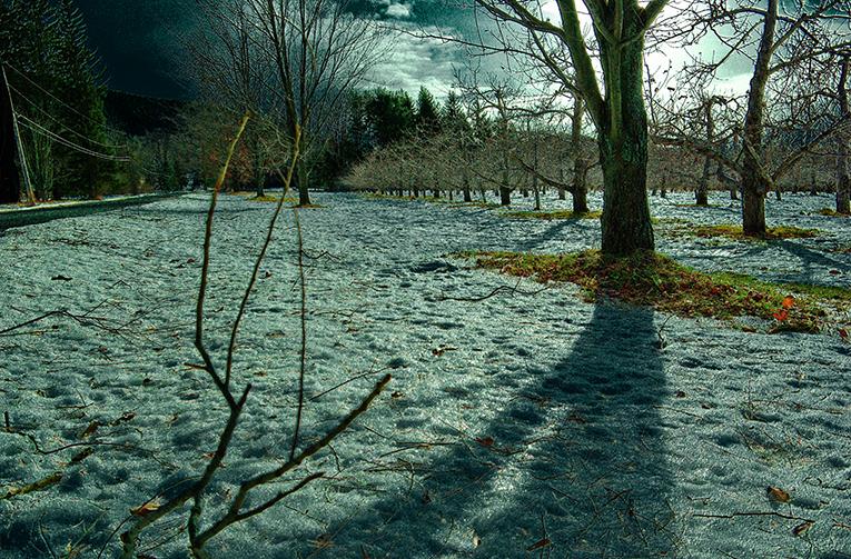 December Orchard by vetal-vetal