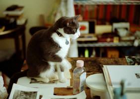 Studiocat