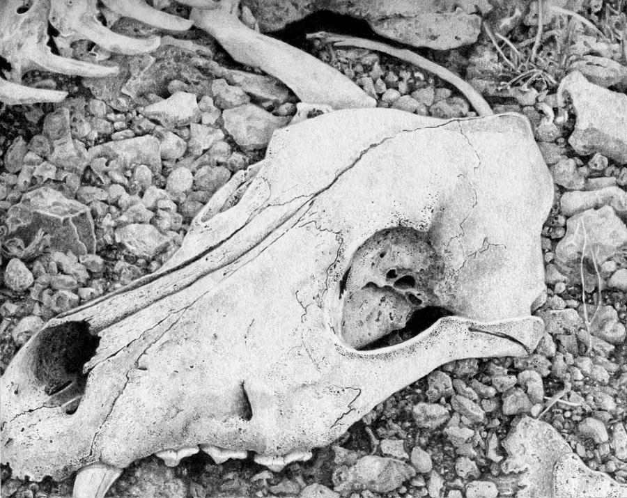 Wolf skull by GrayWolfcg