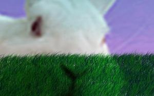 Bunny manip by mxgirl199
