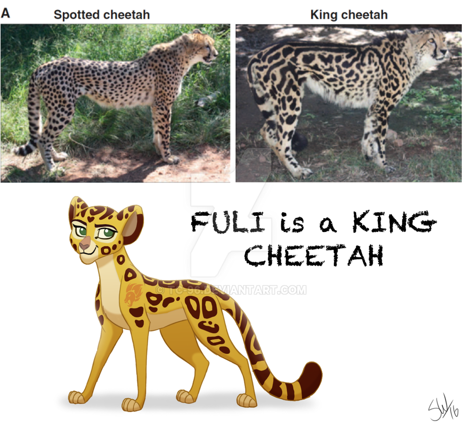 cheetah facts for kids pdf