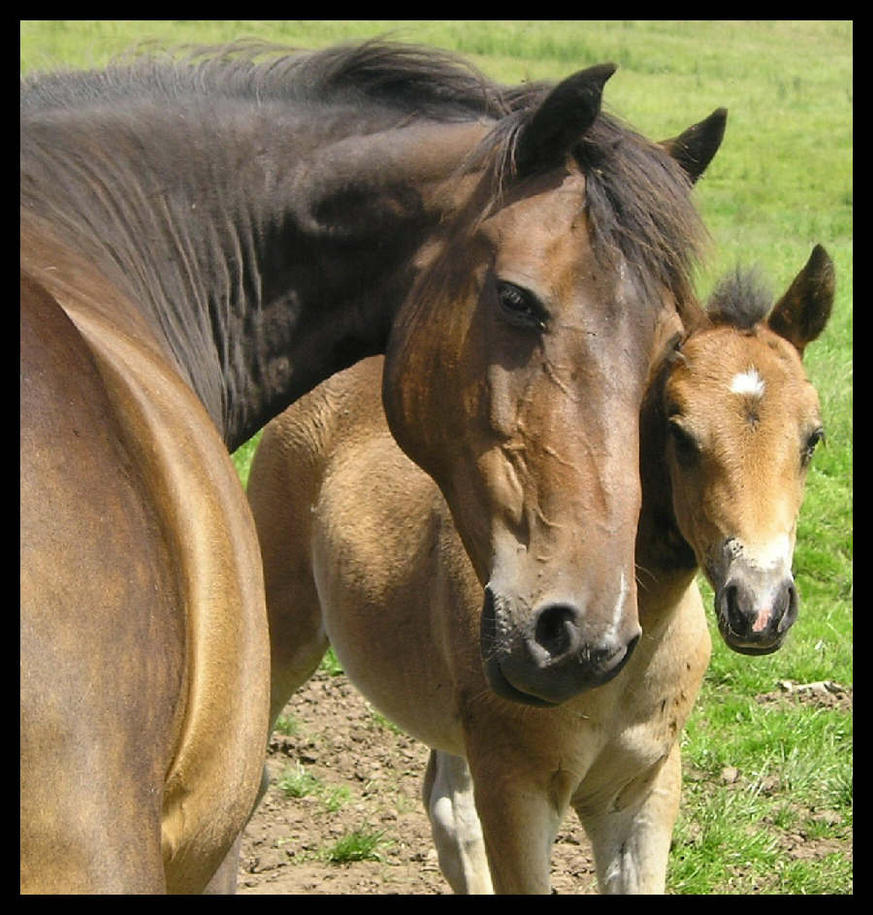 Mare and her foal - Edited by Spirit-Of-The-Horse